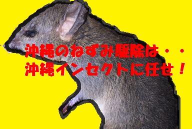 沖縄のねずみ駆除は・・沖縄インセクトにお任せ!
