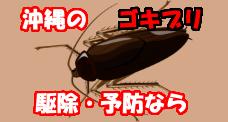 沖縄のゴキブリ・ダニ駆除・予防なら