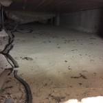 ねずみの糞 ~ 床下状況